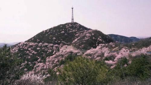 青天河风景区:一山桃花 盎然一个春天